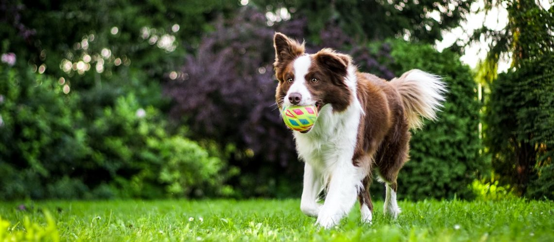 How to keep your dog mentally stimulated?
